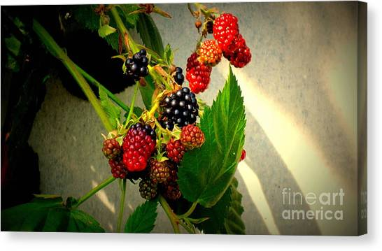 Wild Berries Canvas Print - Blueberry - Raspberry by Susanne Van Hulst