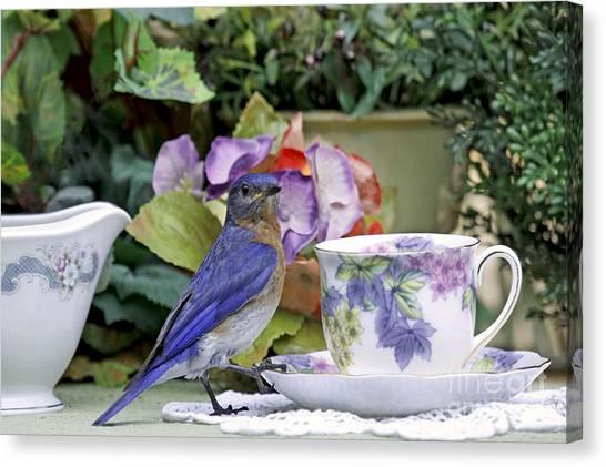 Bluebird And Tea Cups Canvas Print