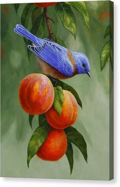 Fruit Trees Canvas Print - Bluebird And Peaches Greeting Card 1 by Crista Forest