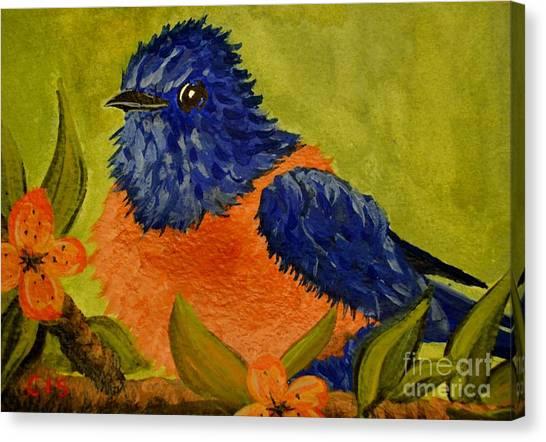 Bluebird Canvas Print by Cecilia Stevens