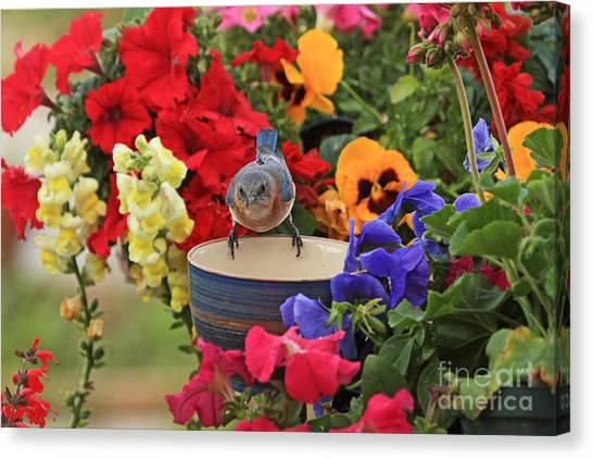 Bluebird Garden Canvas Print