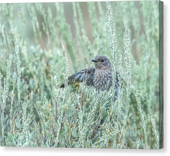 Bluebird In Sage Canvas Print