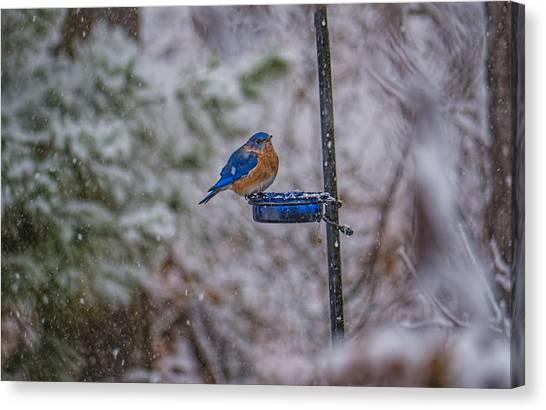 Bluebird In Snow Canvas Print