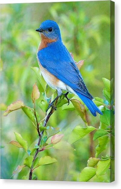 Bluebird Joy Canvas Print