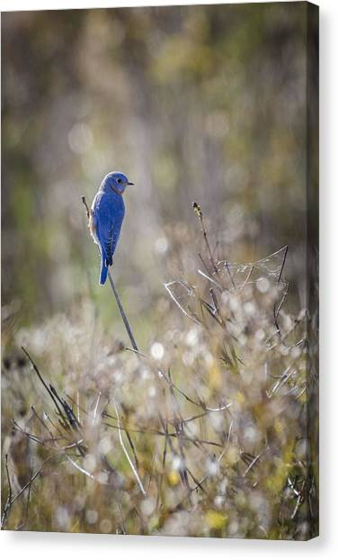 Bluebird Meadow Canvas Print