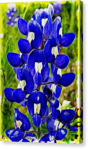 Bluebonnet Canvas Print