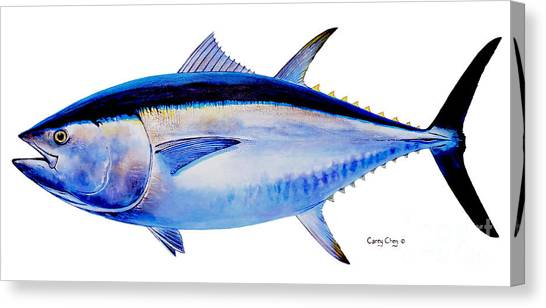 Florida Wildlife Canvas Print - Bluefin Tuna by Carey Chen