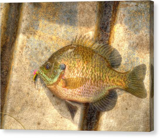 John Boats Canvas Print - Bluegill In Hdr by Thomas Young