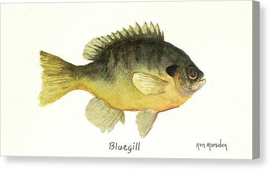 Bluegill Canvas Print