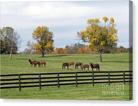 Horse Farms Canvas Print - Bluegrass Autumn by Roger Potts