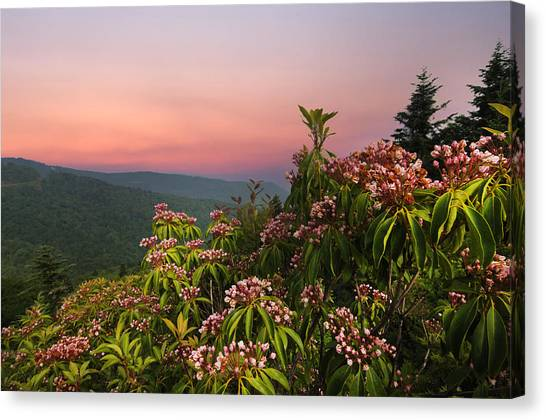 Blueridge Parkway Mountain Laurel Canvas Print