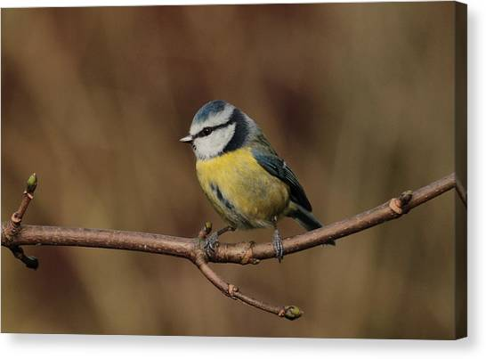 Bluey Canvas Print by Peter Skelton