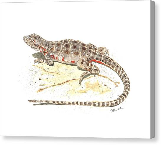Blunt-nosed Leopard Lizard  Canvas Print