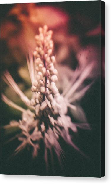 Blured Bloom Canvas Print