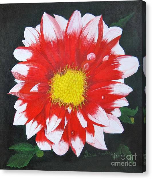 Blushing Dahlia Canvas Print
