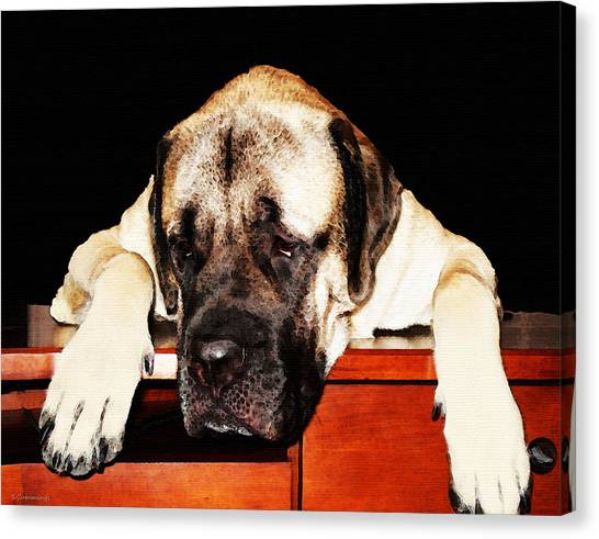Mastiffs Canvas Print - Mastiff Art By Sharon Cummings by Sharon Cummings