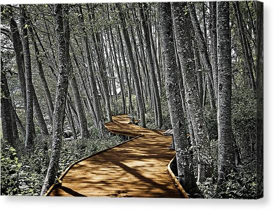 Boardwalk In The Woods Canvas Print