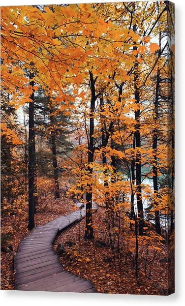 Gatineau Park Canvas Print - Boardwalk Trail In Autumn by Preappy