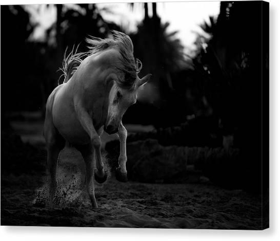 Dust Canvas Print - Boast by Abdullah Al-saeed