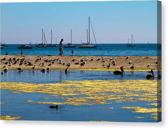 Boats And Birds Canvas Print by Bernard  Barcos
