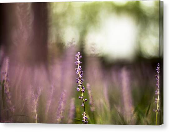 Bokeh With Purple Wildflower Canvas Print
