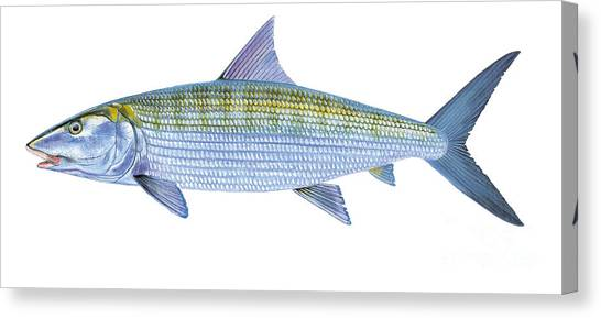 Fly Fishing Canvas Print - Bonefish by Carey Chen
