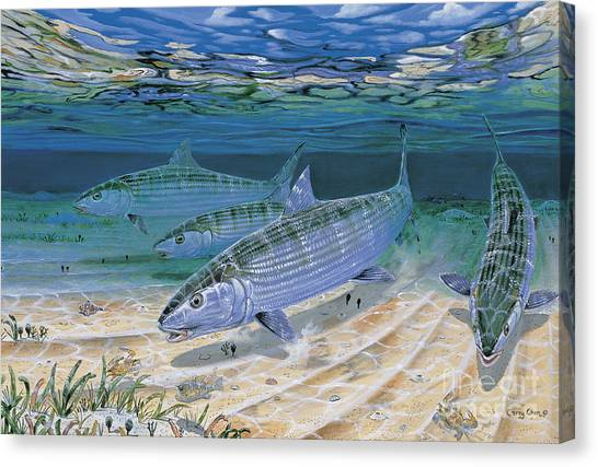 Fly Fishing Canvas Print - Bonefish Flats In002 by Carey Chen
