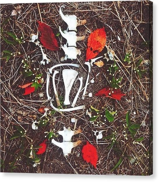 Harley Davidson Canvas Print - Bones. 🍁 by Harley Altaville