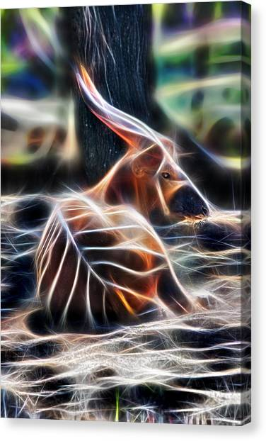 Bongo In Tune With The Energies Canvas Print
