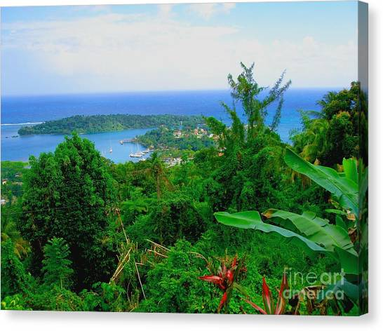 Jamaican Canvas Print - Bonnieview by Carey Chen
