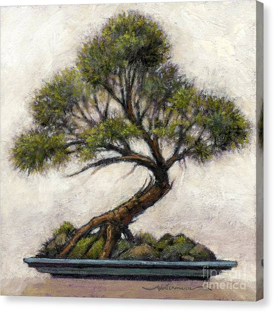 Bonsai Cedar Canvas Print