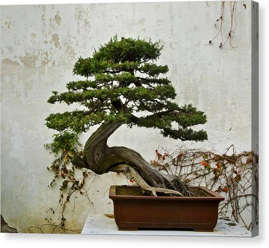 Bonsai Suzhou China Canvas Print
