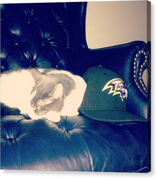 Ravens Canvas Print - #boo Likes The #ravens And The #new by Christopher Morrow