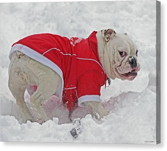 English Bull Dogs Canvas Print - Booboo 03 by Jeff Stallard