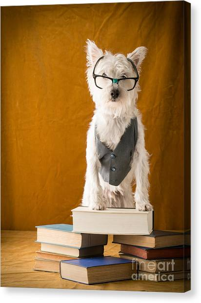 Professors Canvas Print - Bookish Dog by Edward Fielding
