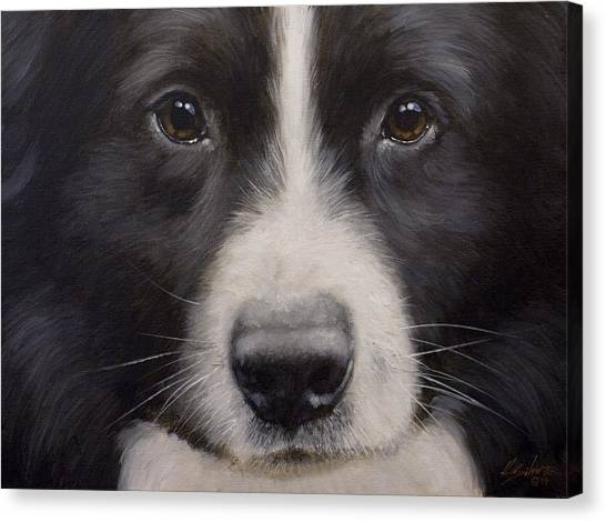 Canvas Print - Border Collie Close Up by John Silver