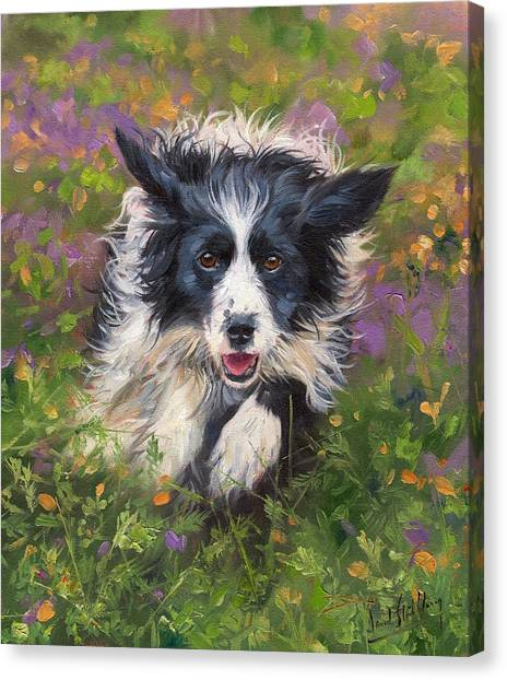 Border Collies Canvas Print - Border Collie by David Stribbling