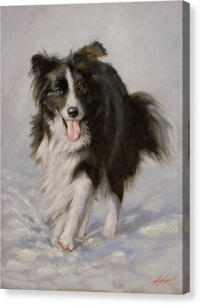 Canvas Print - Border Collie Portrait I by John Silver