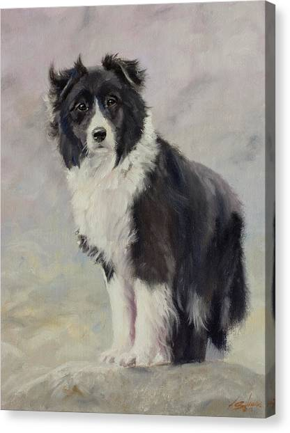 Canvas Print - Border Collie Portrait IIi by John Silver