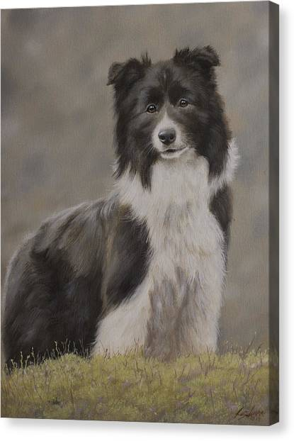 Canvas Print - Border Collie Portrait Viii by John Silver