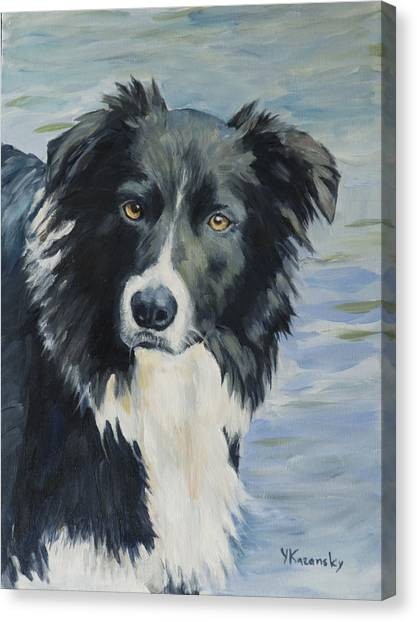 Border Collie Portrait Canvas Print
