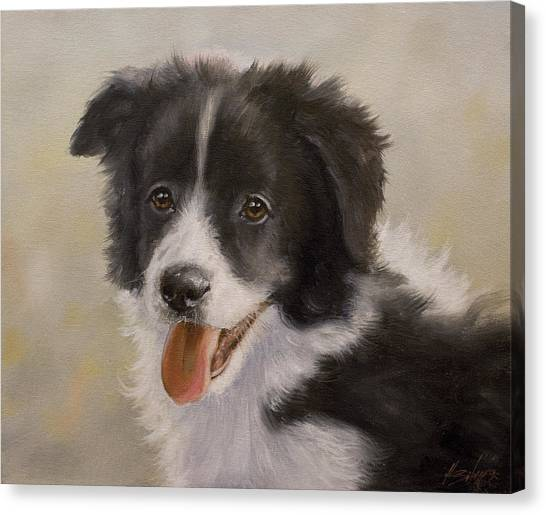 Canvas Print - Border Collie Pup Portrait Iv by John Silver