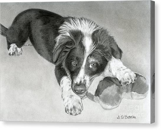 Border Collies Canvas Print - Border Collie Puppy by Sarah Batalka