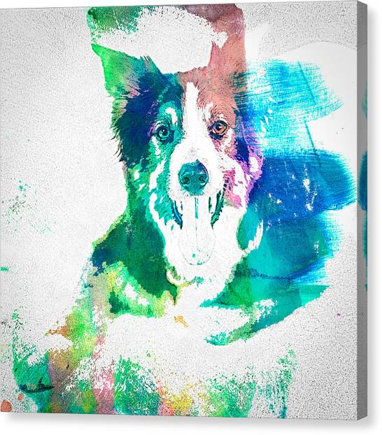 Border Collie - Wc Canvas Print