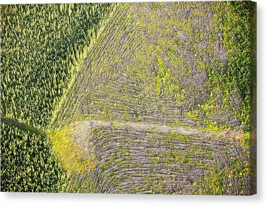 Deforestation Canvas Print - Boreal Forest Felled For Tar Sands Mine by Ashley Cooper