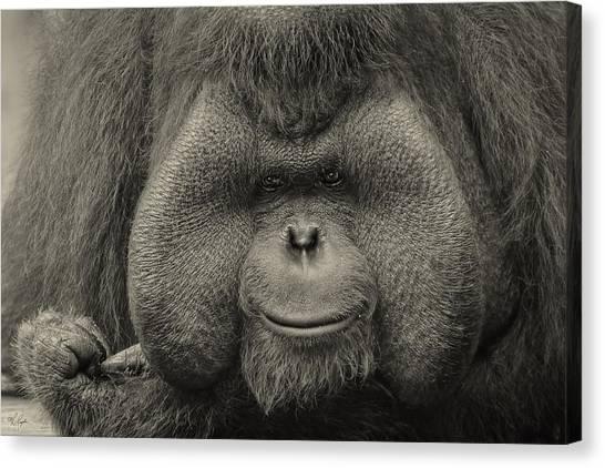 Orangutans Canvas Print - Bornean Orangutan II by Lourry Legarde