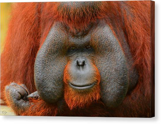 Orangutan Canvas Print - Bornean Orangutan by Lourry Legarde