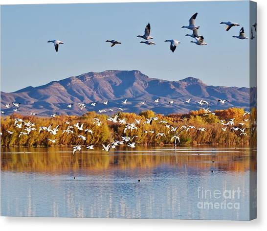 Bosque Del Apache Canvas Print