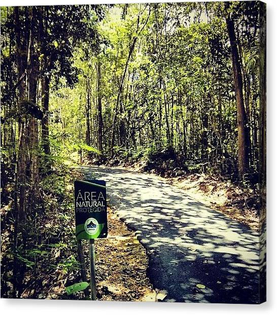 Forest Paths Canvas Print - #bosque Guajataca #forest #natural by Jason Velez