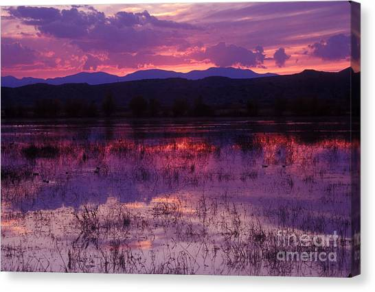Bosque Sunset - Purple Canvas Print